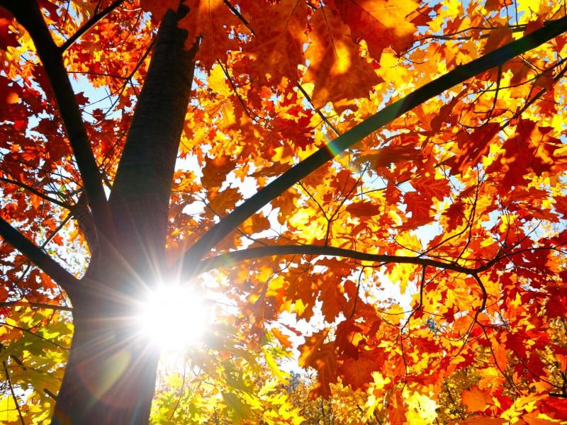 inspire-autumn-beauty-tips